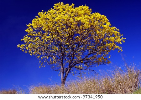 beautiful tree with flowers - stock photo