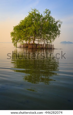 Beautiful tree with lake at morning time,Thailand