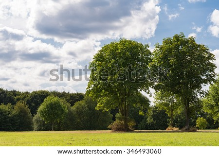 Beautiful trees in a park on a sunny summer day with blue sky.  Meadow of a recreation area apart from city traffic, perfect for nature and lifestyle blogs and magazines - stock photo