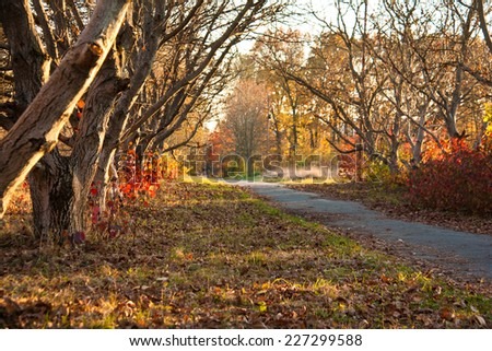 beautiful trees of an autumn forest in a park. Ukraine - stock photo