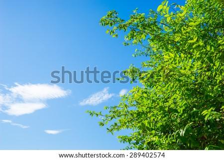 Beautiful trees on sky background - stock photo