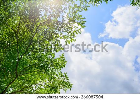 Beautiful trees on sky background,tree,sky - stock photo