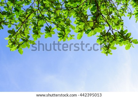 Beautiful trees on sky background,trees