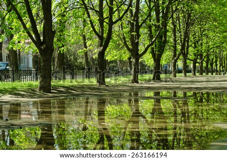 beautiful trees reflected in a puddle - stock photo