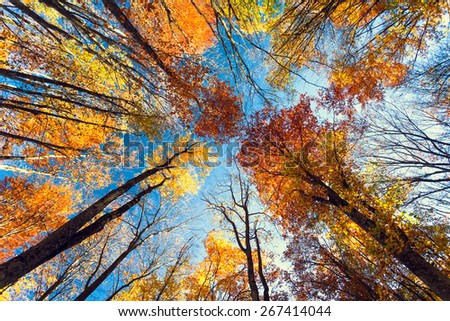Beautiful trees set against the blue sky. Sunset at the autumn forest in Crimea - stock photo