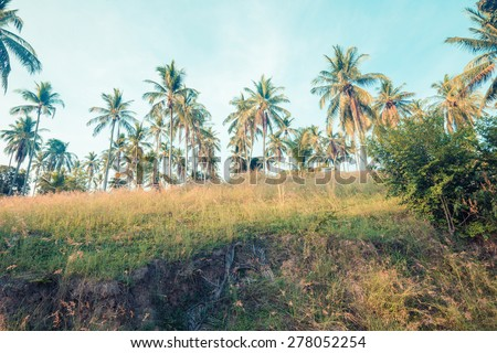 Beautiful tropical background with coconut palms. Vintage filter colour - stock photo