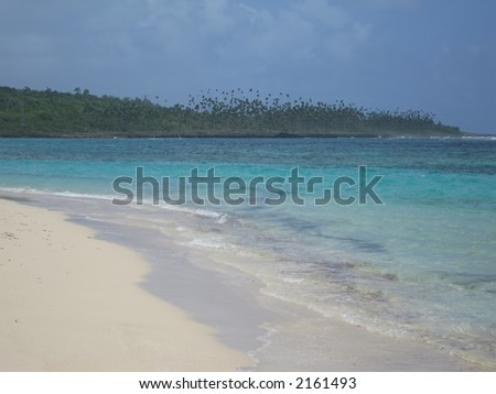 Beautiful tropical beach with a forest of incredibly high palm trees in the background.