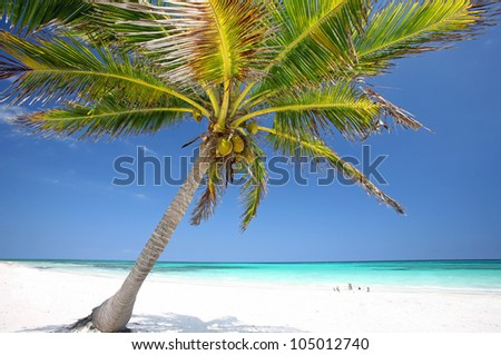 beautiful tropical beach with coconut palm tree, Palm tree in tropical perfect beach, Cancun