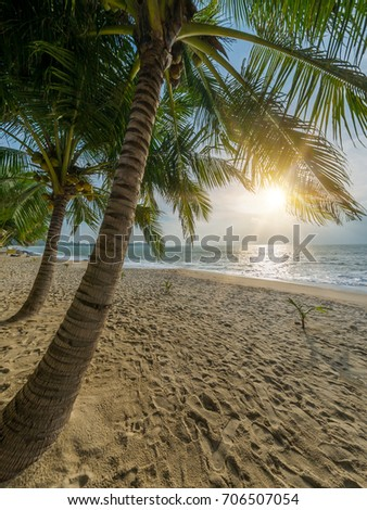 Beautiful tropical beach with coconut trees