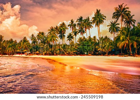 Beautiful tropical beach with palm trees at sunset - stock photo