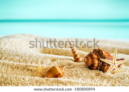 Beautiful tropical beach with seashells lying on the golden sand against a backdrop of a tranquil blue ocean and sunny summer sky - stock photo