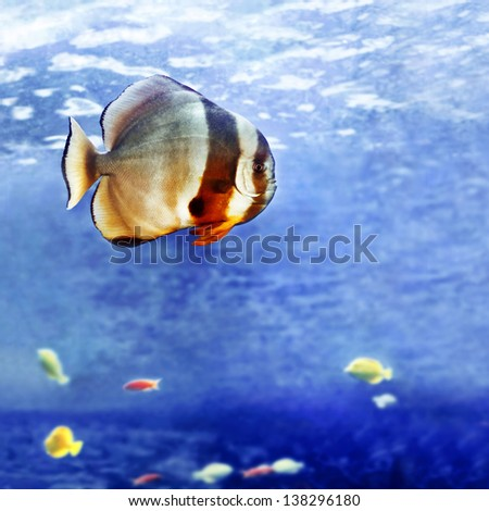 Beautiful tropical fish - stock photo