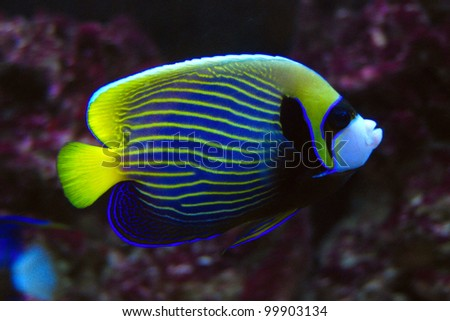 Beautiful tropical fish in an aquarium