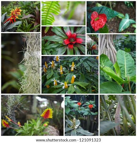 Beautiful tropical flowers grow in jungle. Collage