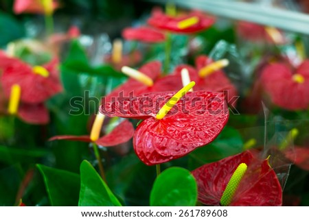 Beautiful Tropical Flowers in a Flower shop - stock photo
