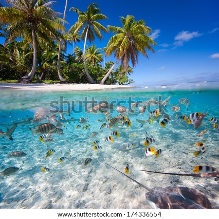 Beautiful tropical island under and above water - stock photo