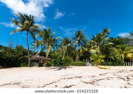 Beautiful tropical island with coconut trees