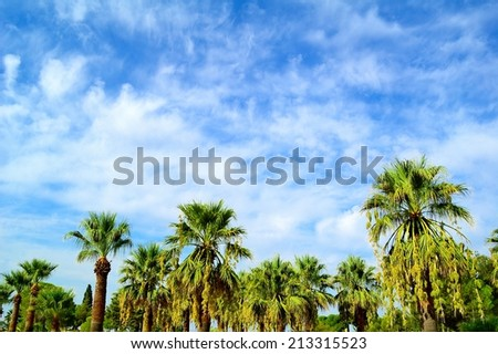 Beautiful tropical palms on the blue sky background