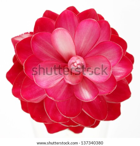 beautiful tropical red ginger flower on isolate white background. - stock photo