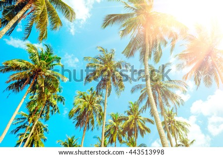 Beautiful tropical sunset with palm trees at beach. Vacation concept - stock photo