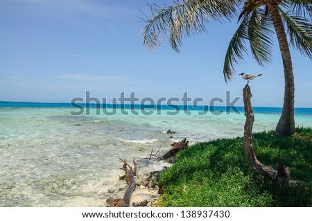 Beautiful Tropical Waters on the Coast of Belize, Central America - stock photo