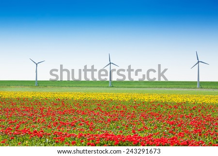 Beautiful tulip field with windmills and sky