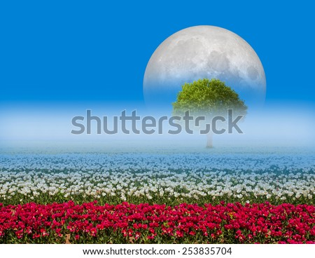 "beautiful tulips field in spring time ""Elements of this image furnished by NASA ""  - stock photo"