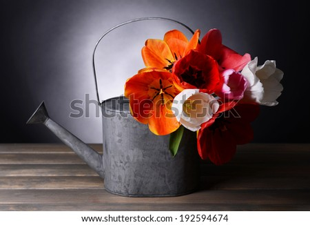 Beautiful tulips in bucket in watering can on table on dark background