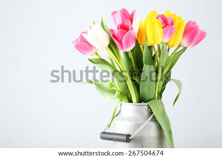 Beautiful tulips in can on white background