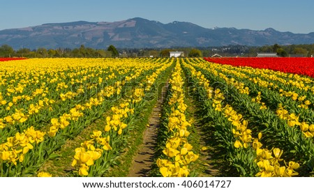 Beautiful tulips in the spring. Variety of spring flowers blooming in beautiful garden.