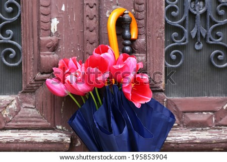 Beautiful tulips in umbrella on old wooden doors - stock photo
