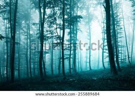 Beautiful turquoise blue color light foggy forest scene. (biscay bay pantone color used) - stock photo