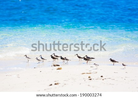 beautiful turquoise sea on the Philippine island and bird