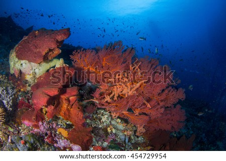Beautiful underwater landscape with healthy reefs and corals and schooling fishes in shallow water. Indonesia - stock photo
