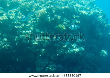 Beautiful underwater photo with coral reef and tropical fishes. Blue sea view with marine fauna.