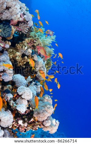 Beautiful underwater reef with copy space for your text.