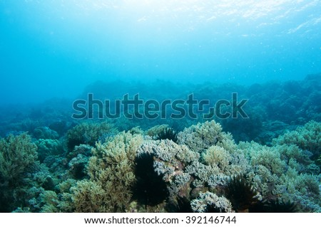 Beautiful underwater scene