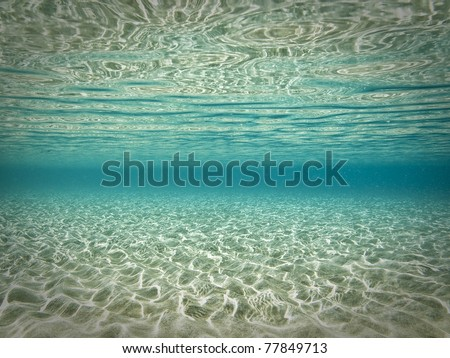 Beautiful underwater scene - stock photo