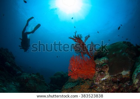 Beautiful underwater view with the healthy reef, silhouette of a diver, soft and hard coral, fishes and sun behind. Nusa Penida, Indonesia. - stock photo