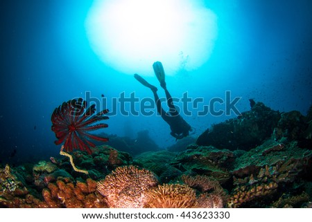 Beautiful underwater view with the silhouette of a diver behind and a feather star. Healthy coral reef, with lots of schooling fishes, light and hard and soft corals. Nusa Penida, Indonesia.  - stock photo