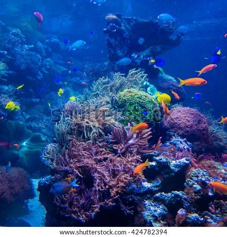 beautiful underwater world - stock photo