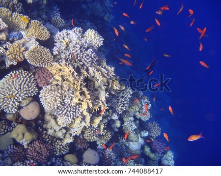 Beautiful underwater world landscape with colorful fishes and coral reef