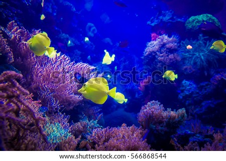 Underwater Animals Stock Images, Royalty-Free Images & Vectors ...