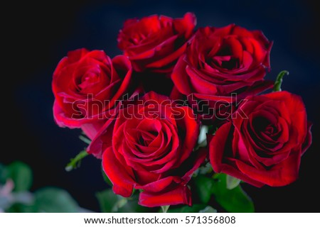 valentine roses stock images, royaltyfree images  vectors, Natural flower