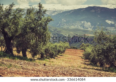 Beautiful valley with old olive trees in Granada, Spain - stock photo