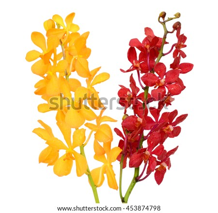 beautiful vanda orchid flowers, isolated on white background - stock photo