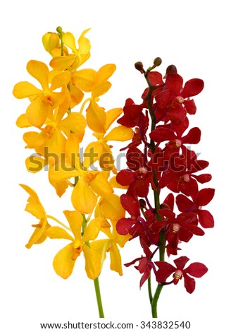 beautiful Vanda orchids flowers, isolated on white background - stock photo