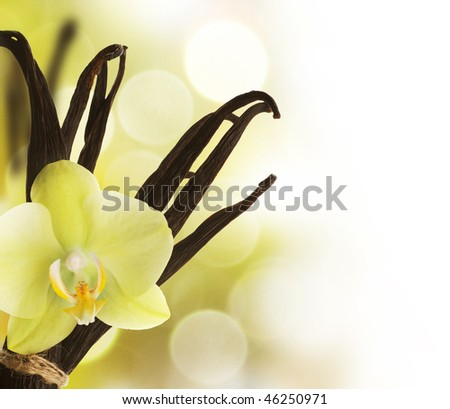 Beautiful Vanilla Border - stock photo