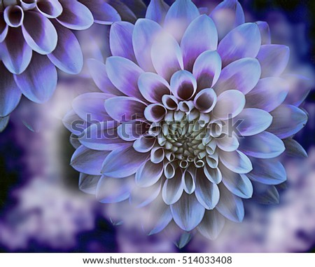 Beautiful variegated dahlia flower texture, white and purple colors with blur