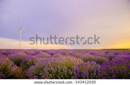 Beautiful vibrant sunset over a lavender field with wind turbine - stock photo